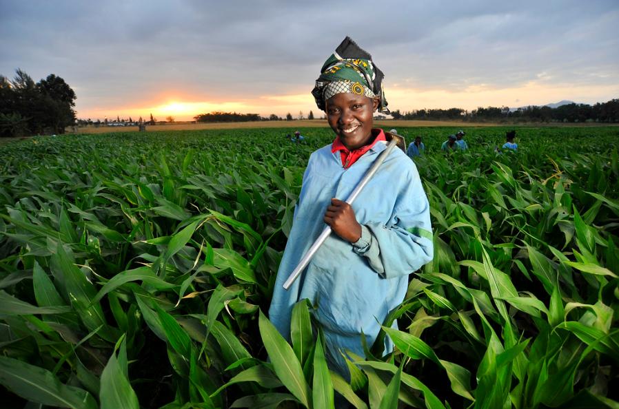 التعاونيات الزراعية.. نموذج أفريقي لعالم أكثر استدامة