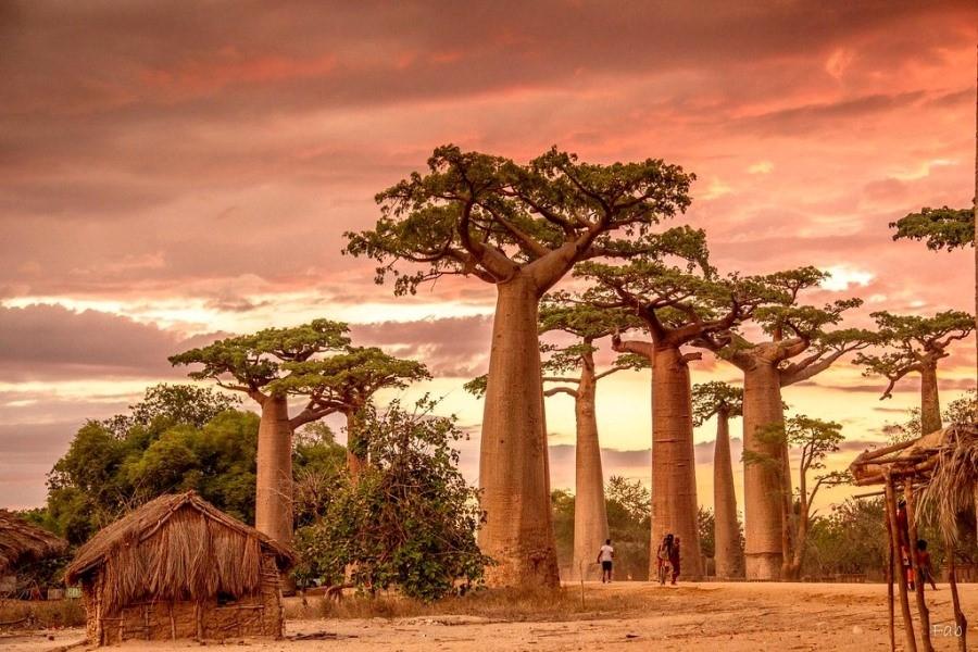 مدغشقر.. فردوس أفريقيا الأحمر