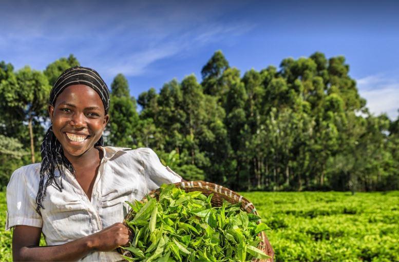 الأعمال الزراعية.. صناعات أفريقية لتمكين رواد الأعمال من شباب القارة