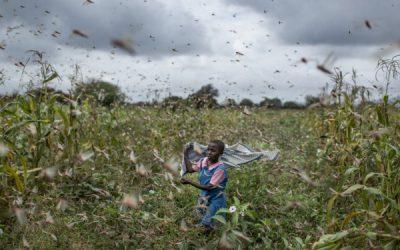 الجراد يجتاح شرق أفريقيا.. تهديد بأزمة إنسانية واسعة