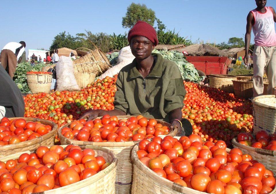 الزراعة والصناعة.. كيف تدرك موزمبيق إمكانياتها للنمو؟