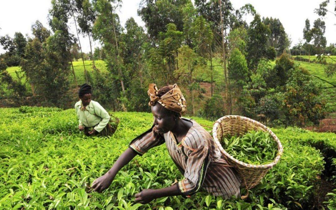 مبادرة TAAT.. تحول زراعي نحو ثورة أفريقية خضراء