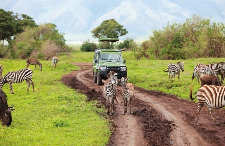 ما هو مستقبل صناعة السياحة في أفريقيا بعد كورونا