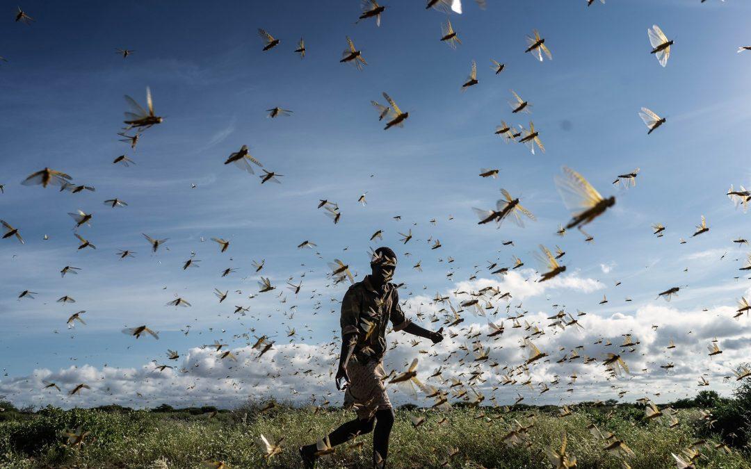 موجة أسوأ بالأفق.. الجراد يهدد بإعادة غزو شمال كينيا