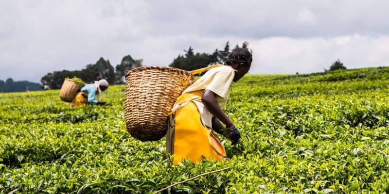 المعلومات وخطط تكيف دول أفريقيا مع تغيرات المناخ.. تطبيقات وحلول