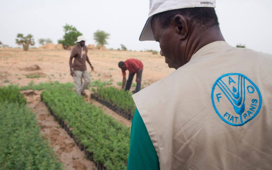 لماذا تفشل الحكومات الأفريقية في الوفاء بالتزاماتها الأممية زراعيًا؟